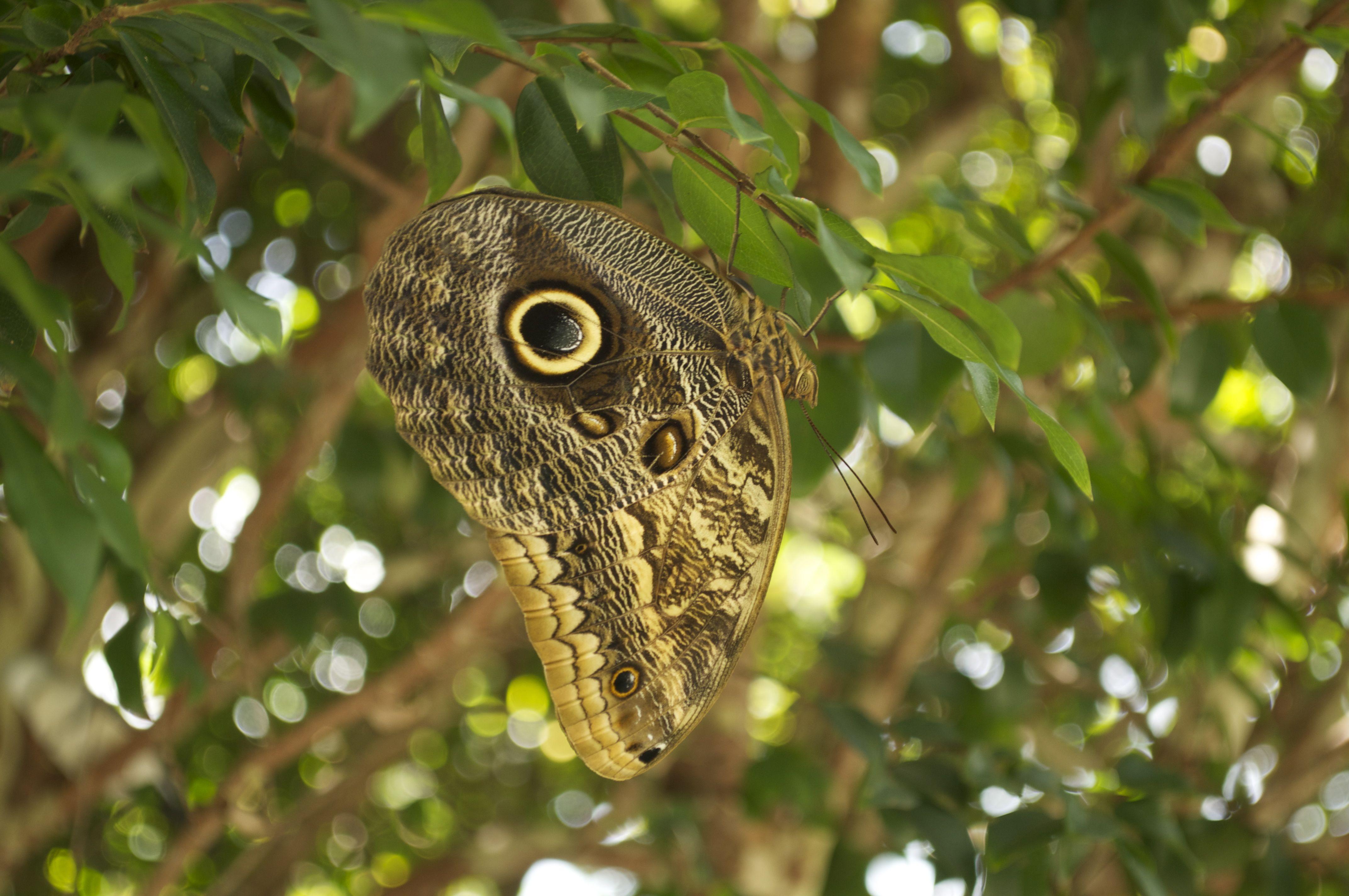 Butterfly World, Pompano Beach, FL | Our Honeymoon: Pompano Beach ...