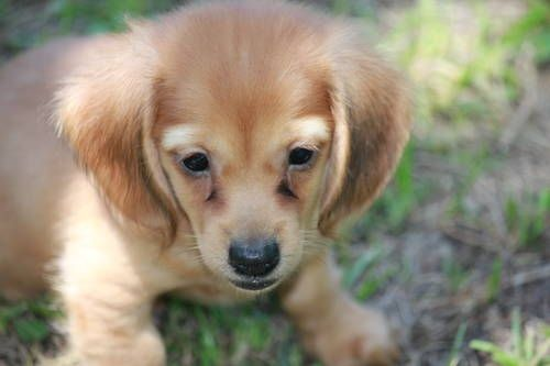 Pin By Elaina Yoon On Animals Kittens And Puppies Cats For Sale Pedigree Dog