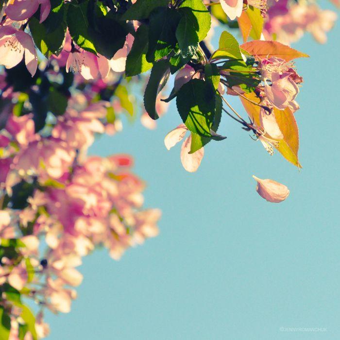 Fall by `Ashwings on deviantART