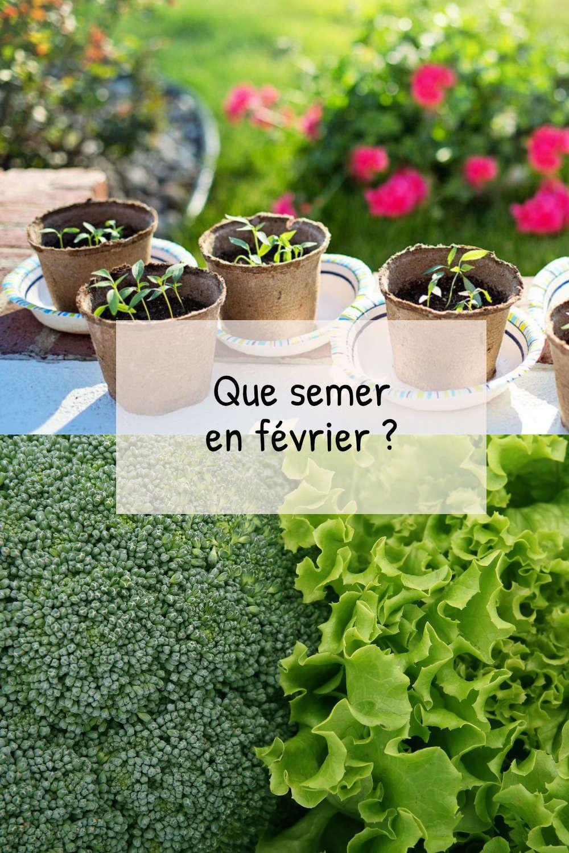 Que semer en février au potager ? Fiches pratiques du