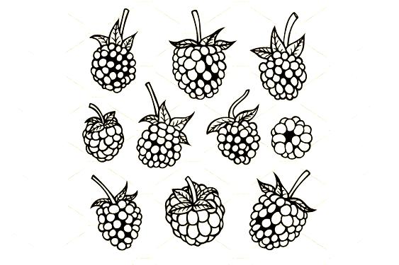 Blackberry Hand Drawn Sketch Illustrations Creative Market En 2020 Moras Tatuajes Zarzamora
