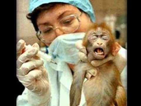 Pin by IzabelJBL on Animal Experiments Pinterest - business petition