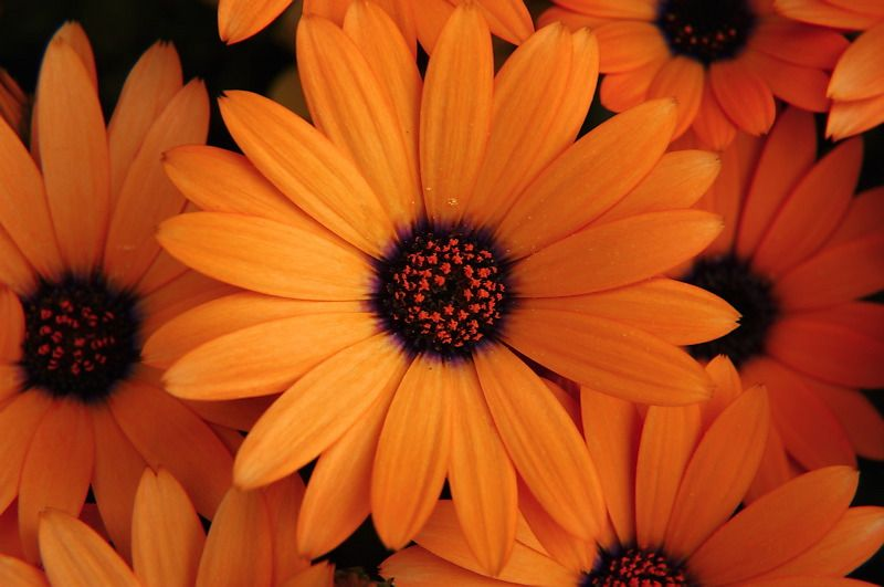 17 Best Images About For The Home On Pinterest | Orange Flowers