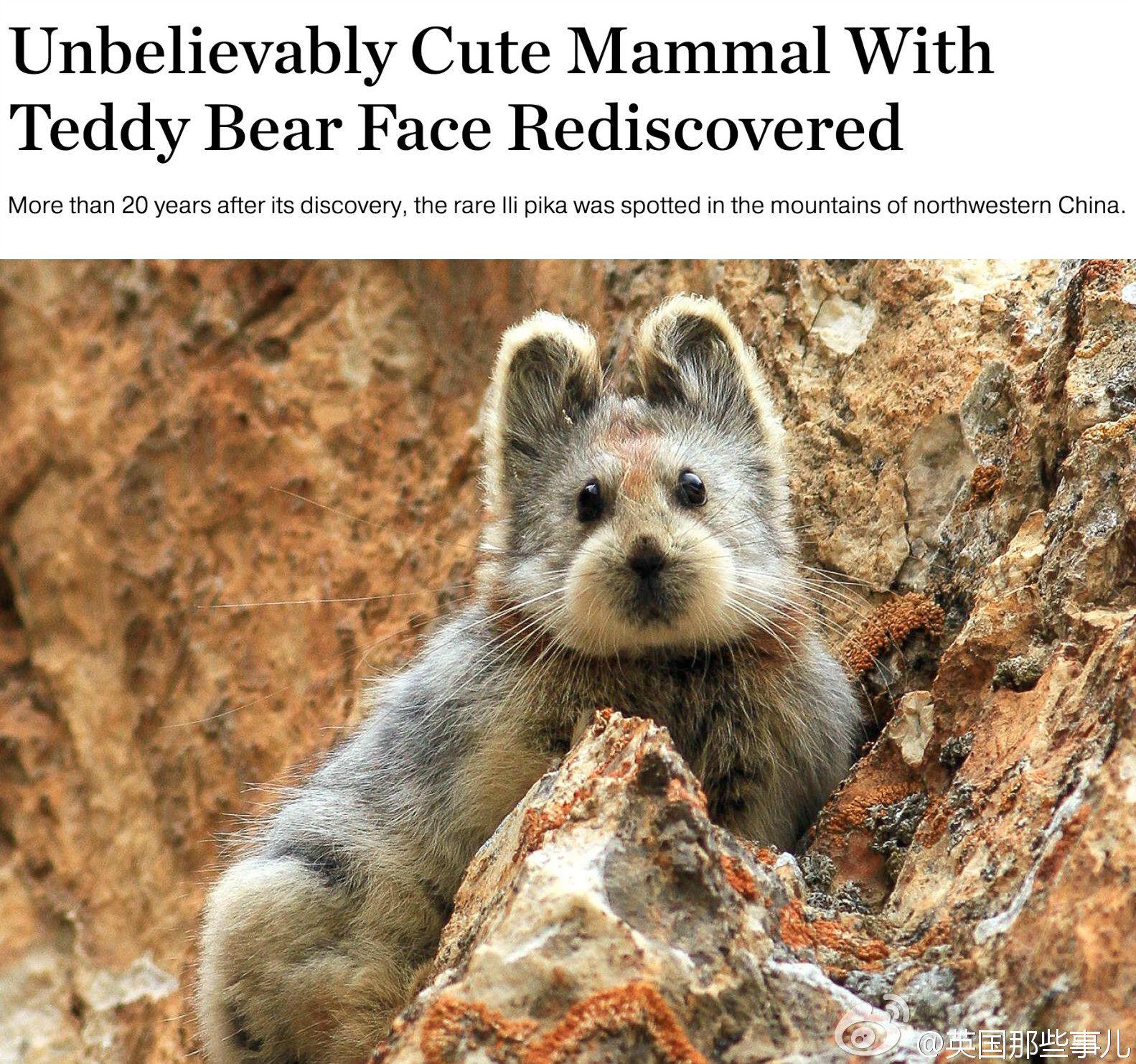 Too cute Rare animals, Endangered animals, Animals