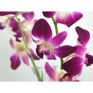 Pin On Purple Flower