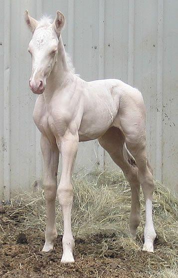 2006 Foals
