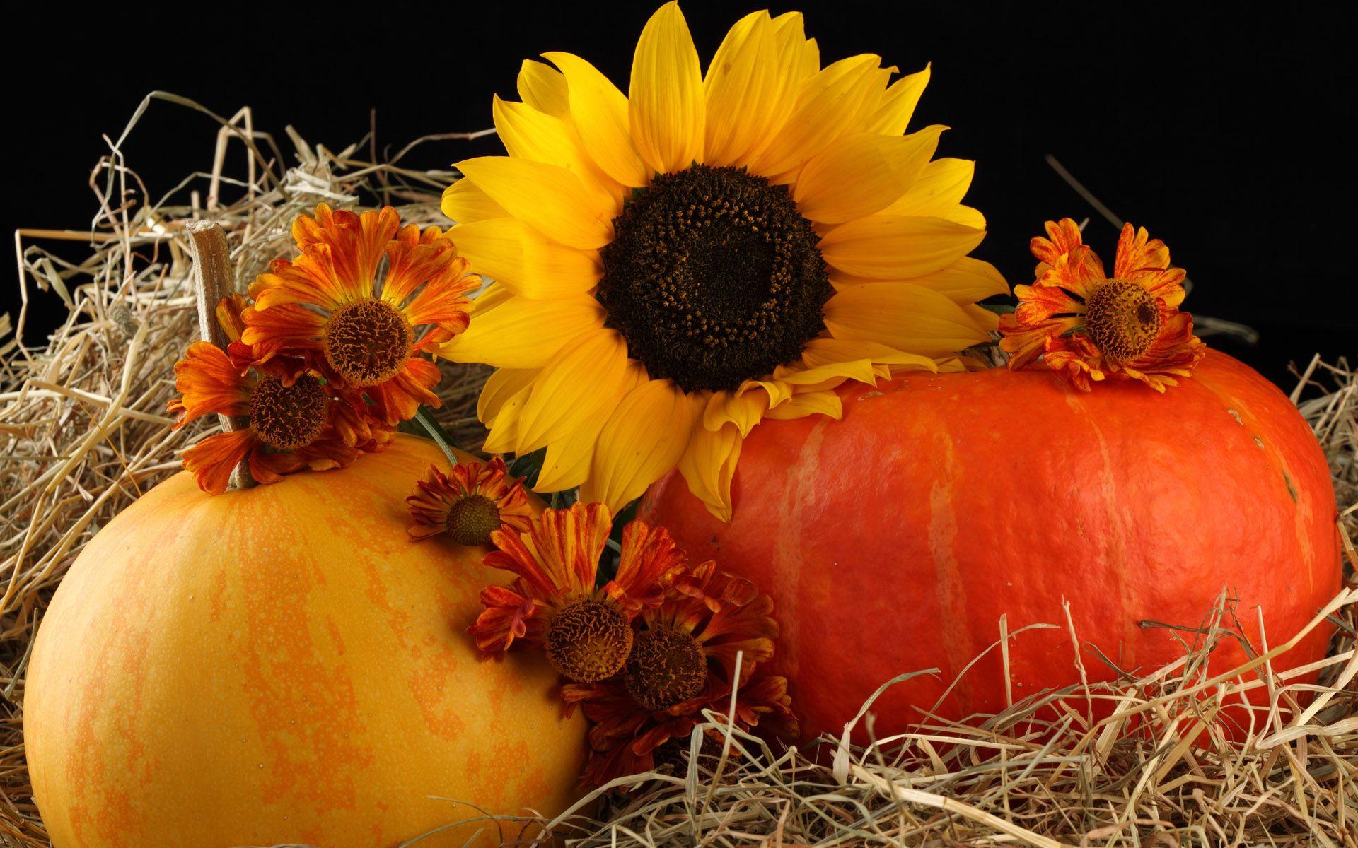 Autumn Love Sunflowers Pinterest