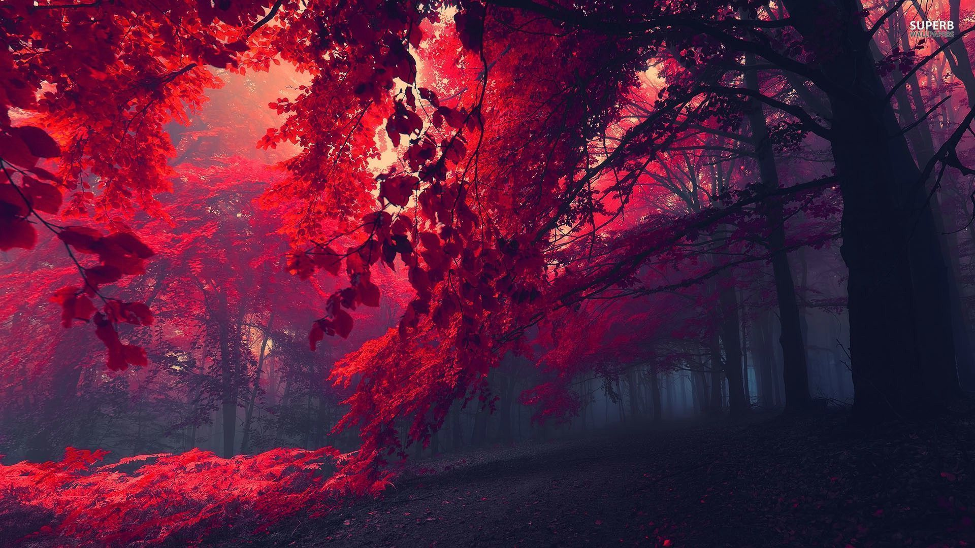 Crimson Forest Red forest wallpaper 1920x1080