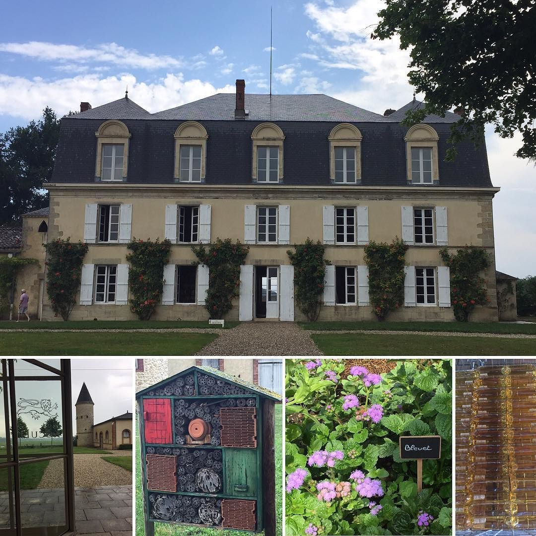 Dating from the 15th century Chateau Guiraud is the oldest property in Sauternes and the only 1855 1st Great Classified Growth certified organic thanks to its ban of pesticides and installation of little wooden insect hotels around the property. Oh to be a bug here.  #1stgrandcruclassé #wine #Sauternes #organicwine #noblerot #insecthotels #abugslife #France #sceniccruises #scenicdiamond