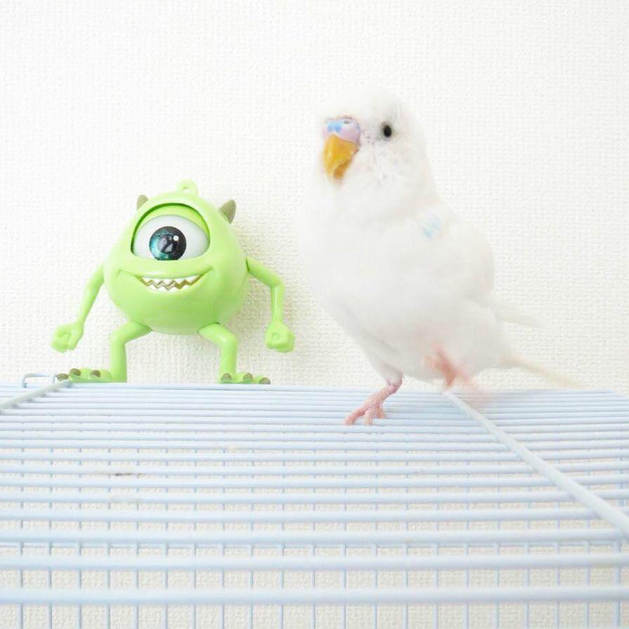 なんかいますけどーー #ディズニー土産 #インコ #鳥 #セキセイインコ #小鳥 #bird #parakeet #parrot #personata #perruche #perico #trueparrots #parrots #sittich #pappagallo #periquitoにa #cocorita #perruche #日常 #budgie #birds  #もふもふ #ふわもこ部 #モンスターズインク #monstersinc by it0807 http://www.australiaunwrapped.com/
