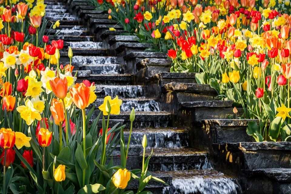 Die italienische Blumen-Wassertreppe auf der Blumeninsel Mainau, umrahmt von Tulpen.