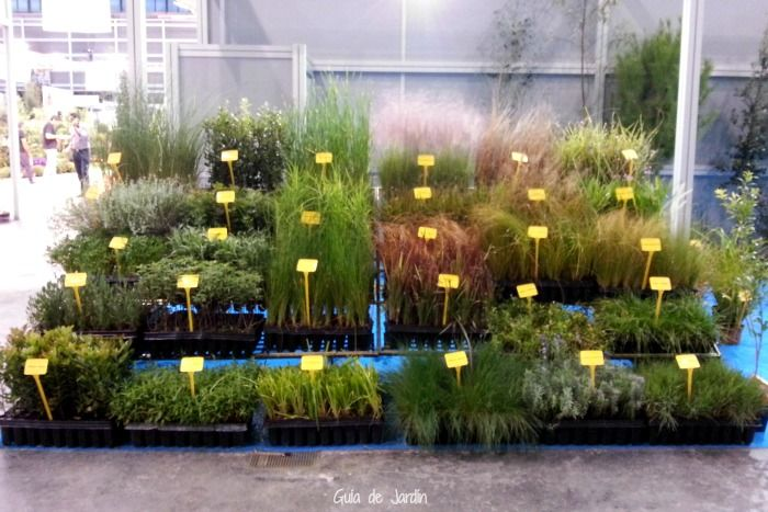 muchas gramneas y plantas silvestres se incorporan al cultivo en jardines para hacerlos ms sostenibles a