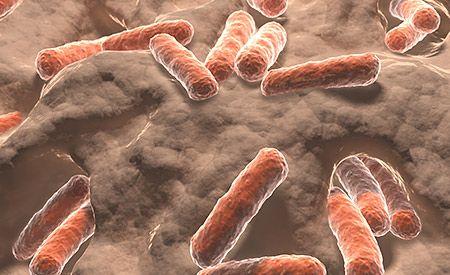 Bifidobakterien für einen gesunden Darm