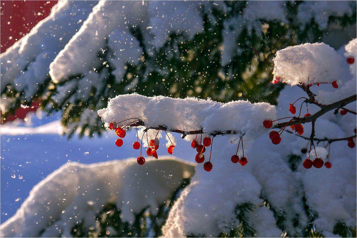 может зимний день живые картинки одно мгновение
