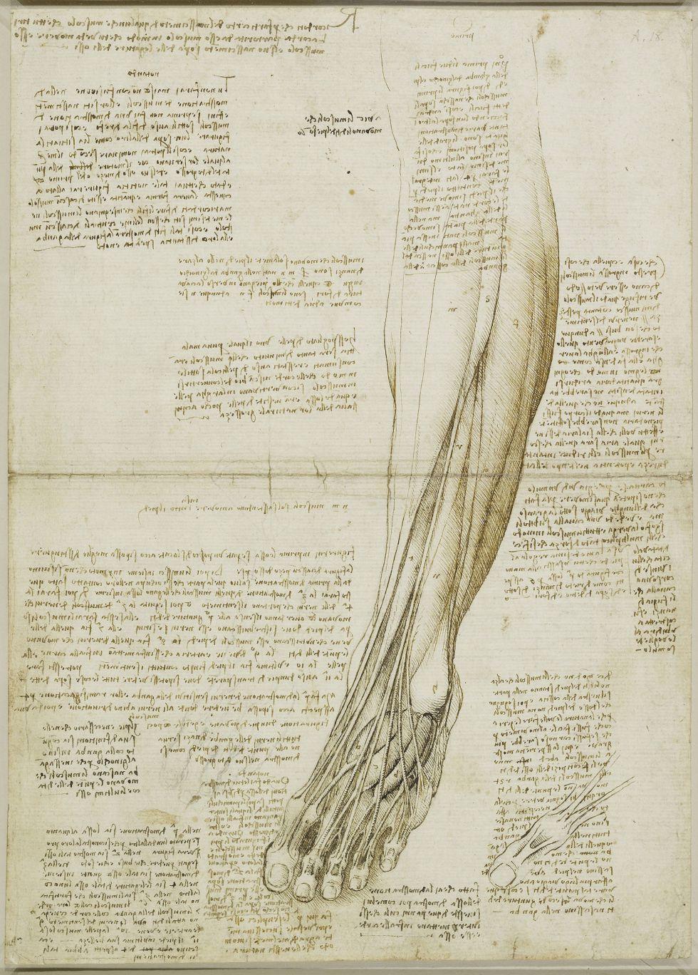 Anatomía de un genio total | El musculo, Músculos y Piernas
