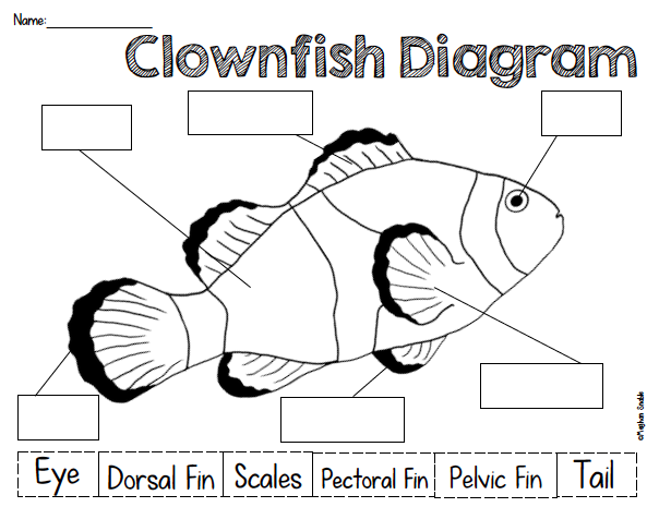 Clownfish Diagram Freebie! | First Grade Resources | Pinterest ...