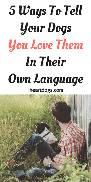 how to tell a dog you love them