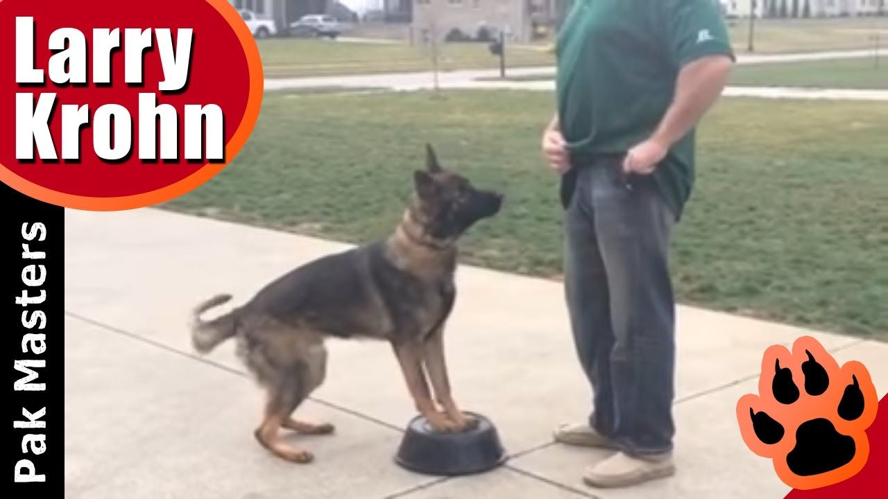 How to teach any dog a competition style heel dog