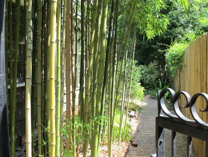 bambus im garten pflanzen-immergrün, robust und pflegeleicht, Best garten ideen