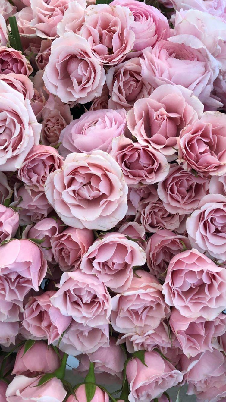 Pin Oleh Cyntia Dwishanti Di Wallpaper Fond Ecran Rose Fleurs