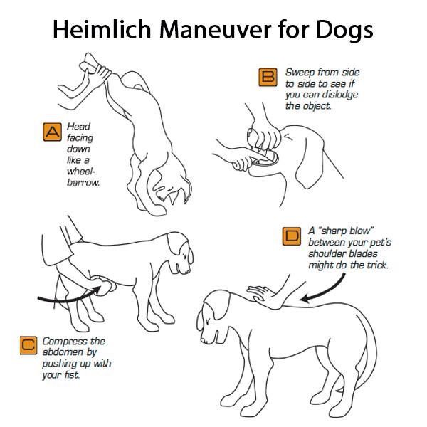 Heimlich Manöver für Hunde