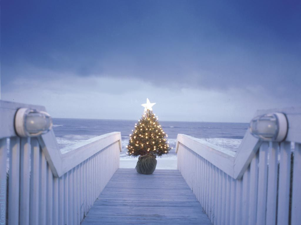 coastal christmas decorating cereusart a coastal lifestyle blog ...