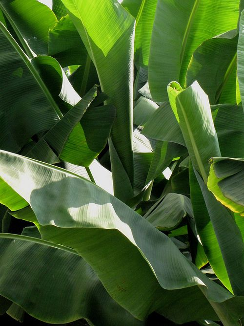 R U Ok Plants Tree Wallpaper Iphone Plant Life Your tropical leaves stock images are ready. pinterest