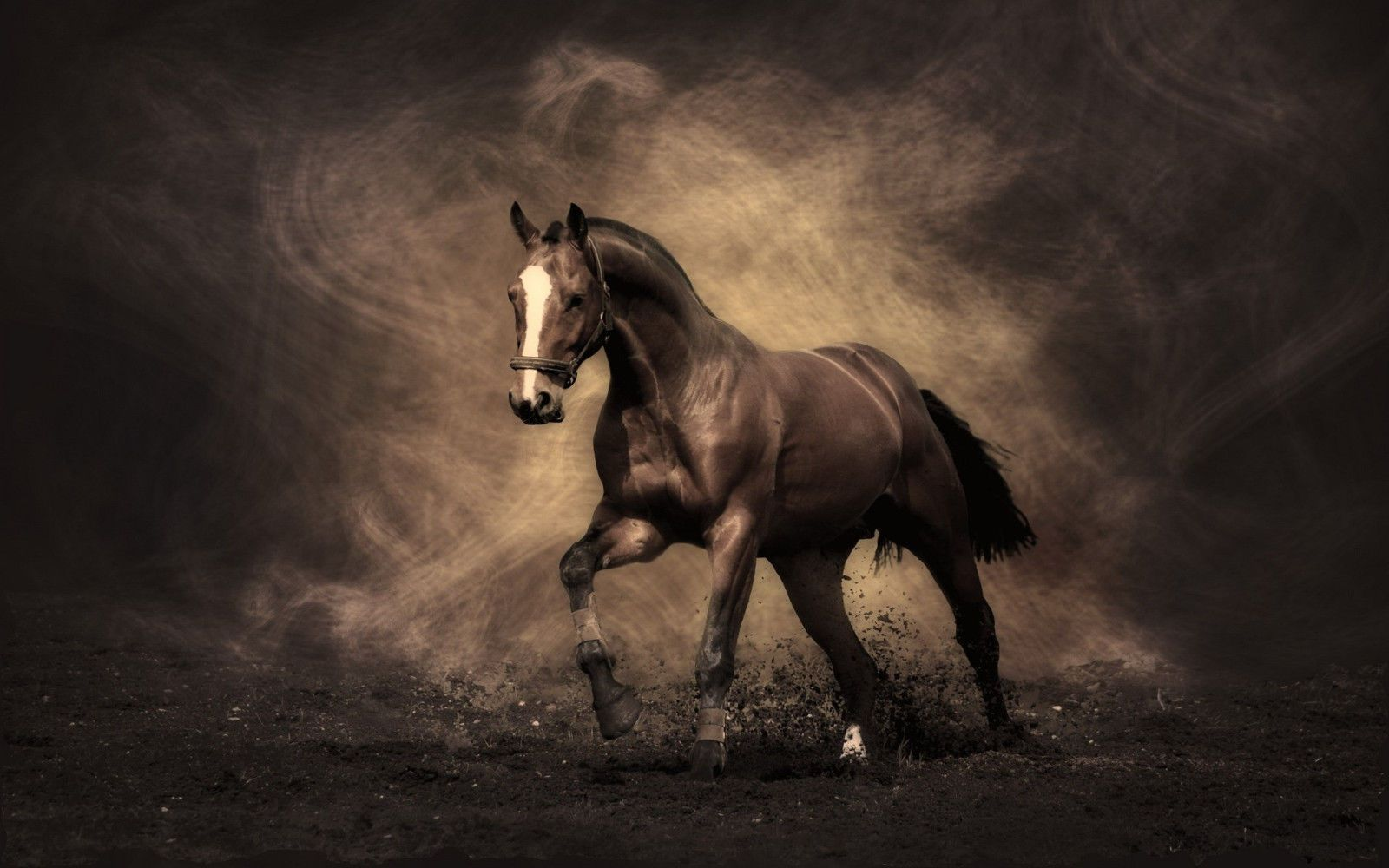 7 95aud Horse Canvas Print A4 Size 297 X 210mm Ebay Home Garden Horse Wallpaper Horses Horse Painting