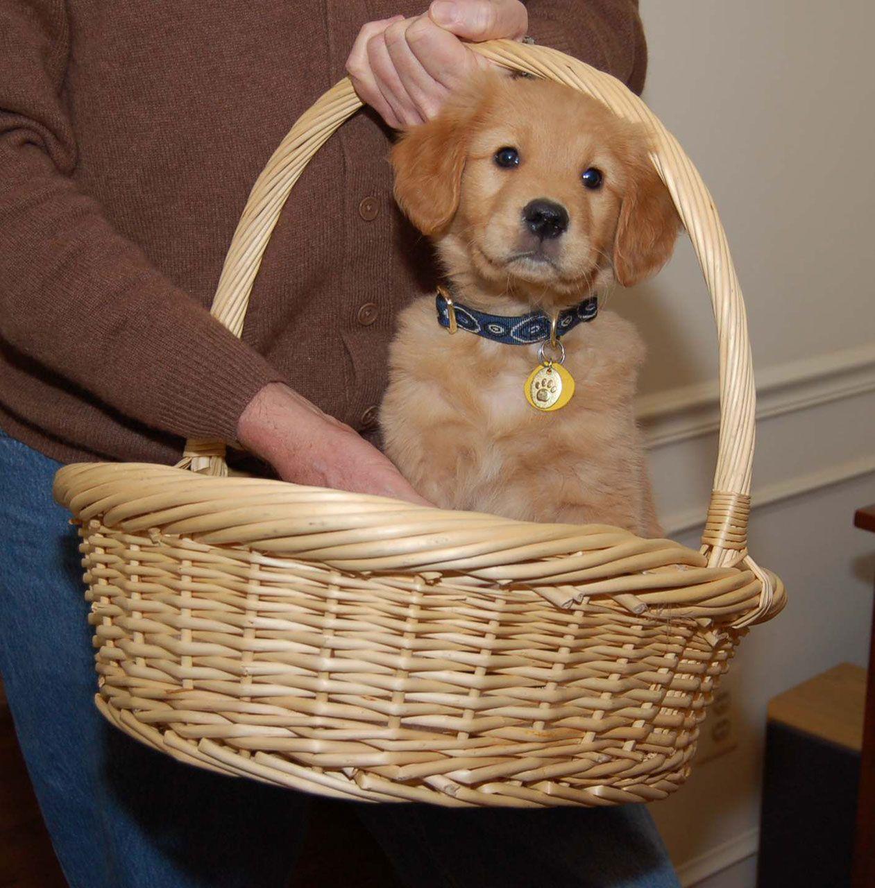 Craigslist Stockton Modesto Pets - Wayang Pets