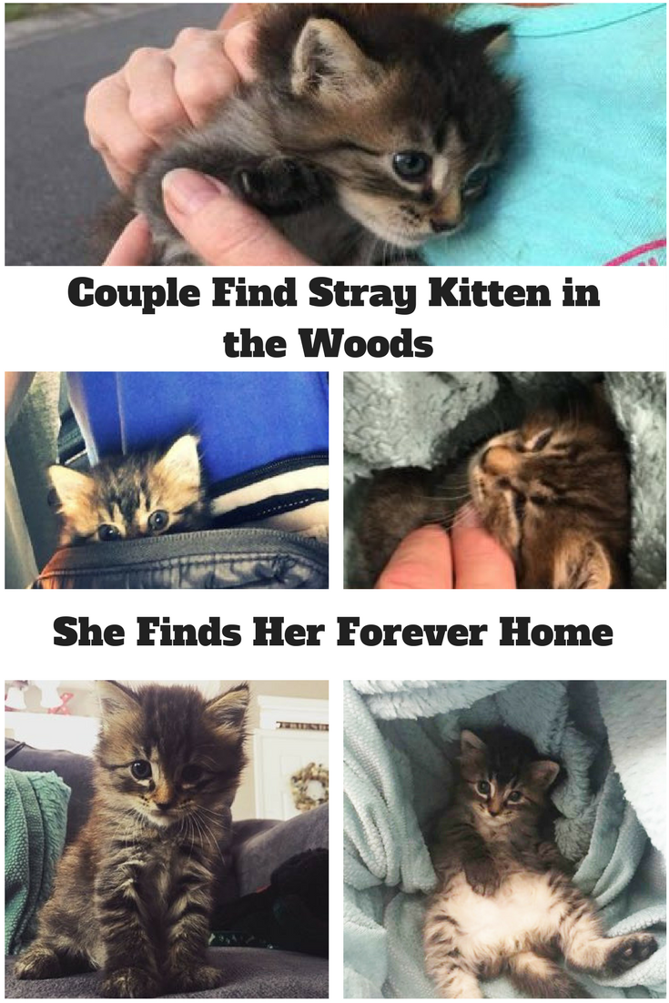 Couple Find Stray Kitten In The Woods And She Finds Her Forever Home Why Do Cats Purr Cute Kitten Pics Kittens