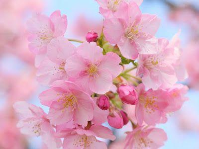 12 fotos de flores preciosas en varios colores para - Fotos flores preciosas ...