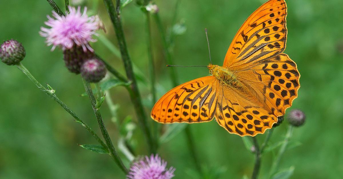 Bildergebnis Fur Raupen Deutschland Bestimmen Schmetterling Bilder