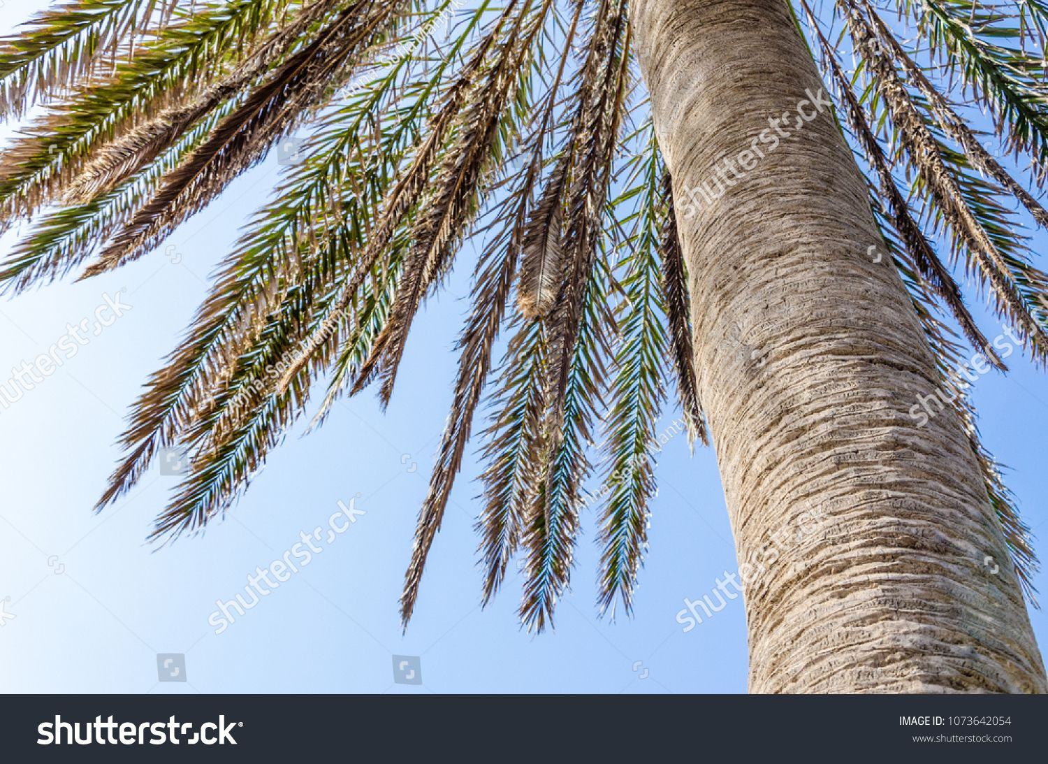 A part of palm tree's trunk and leaves against blue coloured sky. #Sponsored , #affiliate, #tree#trunk#part#palm
