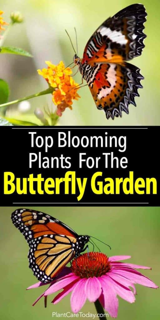 17 Top Blooming Plants For Your Butterfly Garden is part of Butterfly garden design, Butterfly garden plants, Beautiful flowers garden, Pollinator garden, Butterfly garden, Blooming plants - Grow the right butterfly garden plants and establish smart garden practices to attract and provide a safe haven for butterflies  [LEARN MORE]