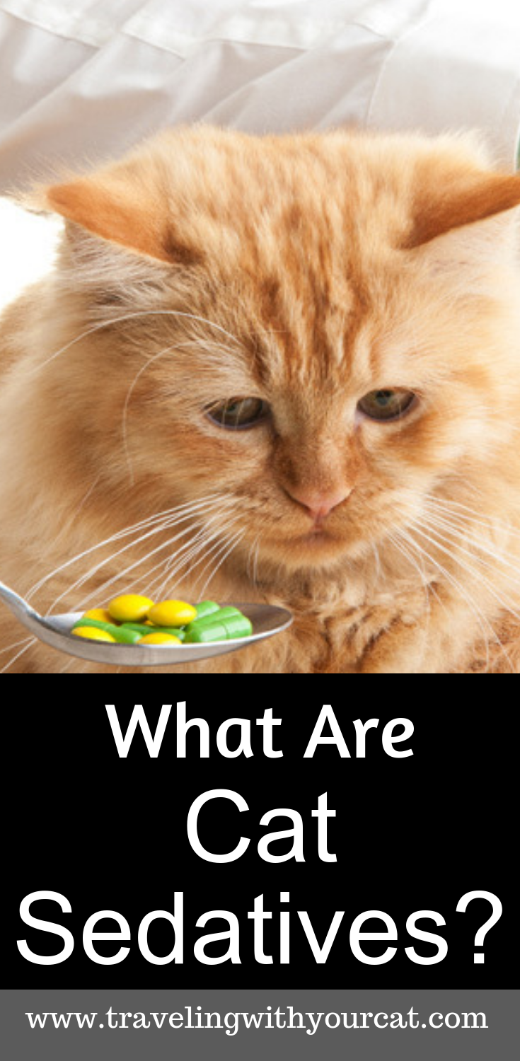 Everything You Need To Know About Cat Sedatives For Travel