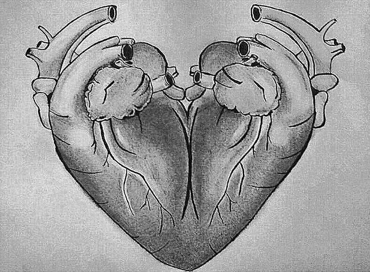 Two Hearts Fused Together Tatuajes De Corazon Real Dos Corazones Corazon Real