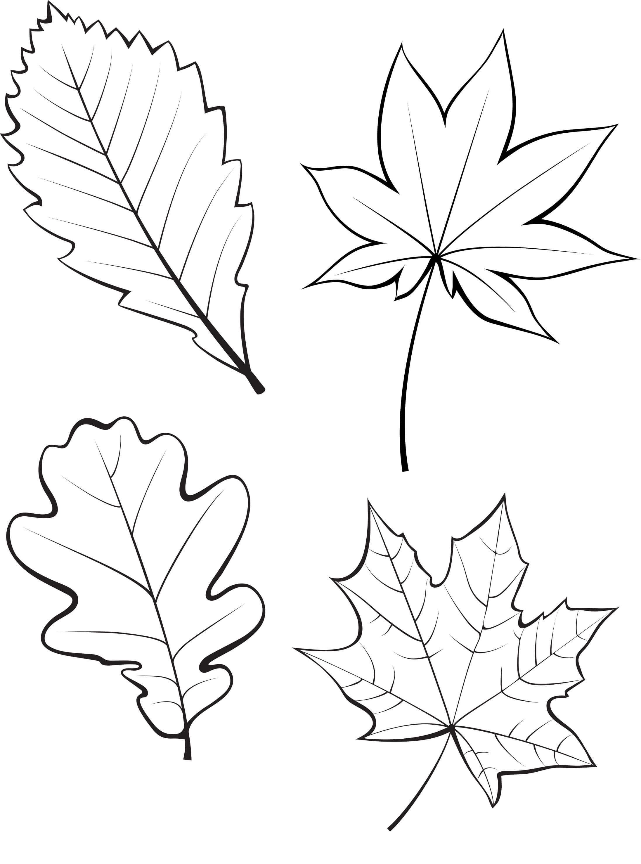Картинки по запросу осенние листья контур | Осенние ...