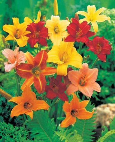 5 fleurs pas ch res planter en hiver jardin potager. Black Bedroom Furniture Sets. Home Design Ideas