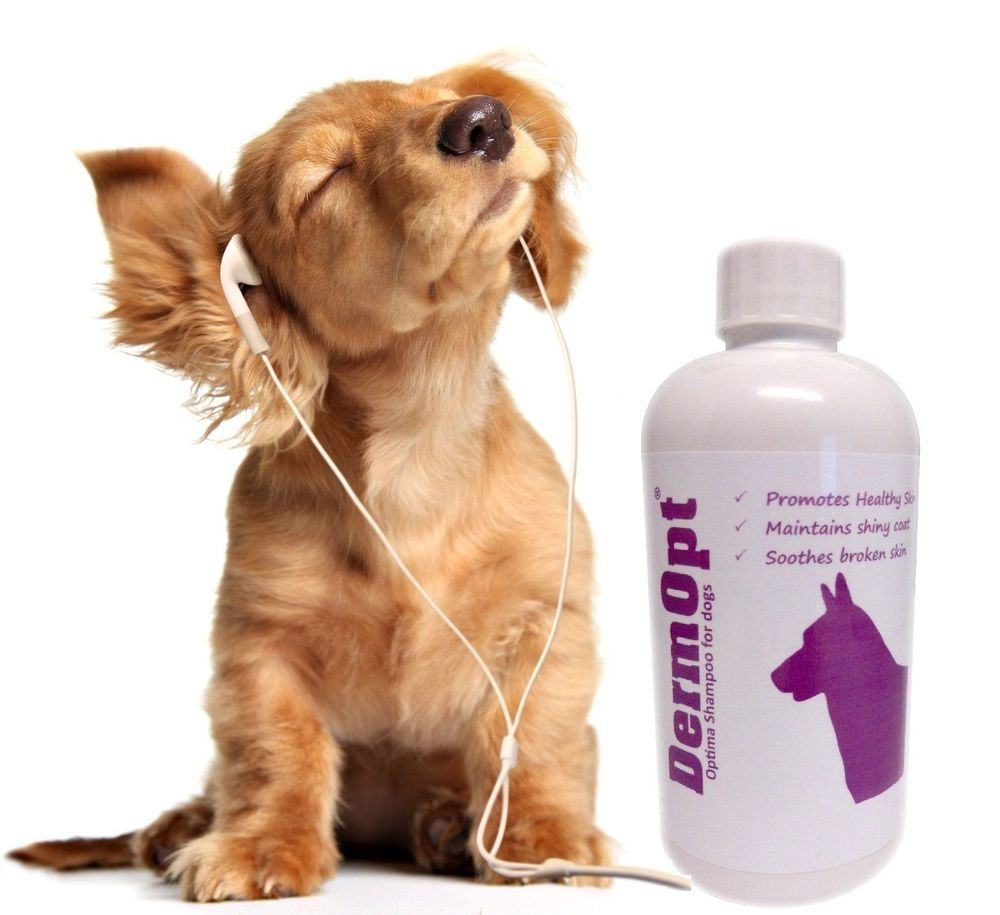Dog shampoo wool health conditioner moisturiser detangle