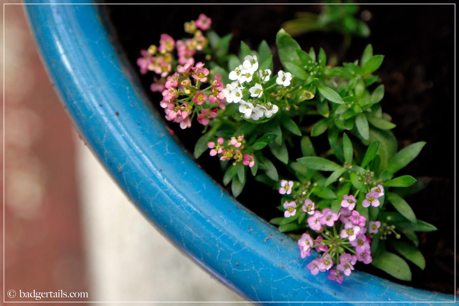 Badgertails ~ Homemaker: May Garden   2014