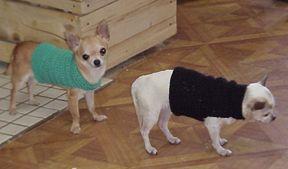 Fácil PERRO patrón de suéter de ganchillo gratis - Free Crochet Pattern Cortesía de Crochetnmore.com