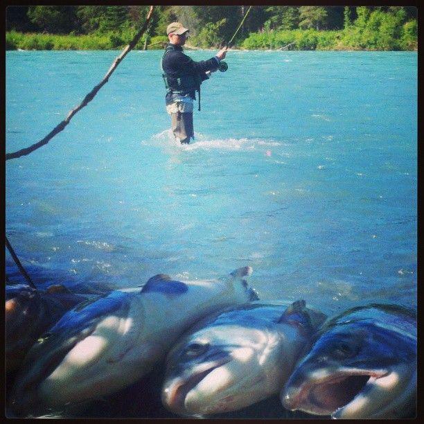 Kenai River Imge Kenai River Fly Fishing Guided Alaska Fly Fishing Alaska Salmon Fishing Alaska Fishing Fishing Trip