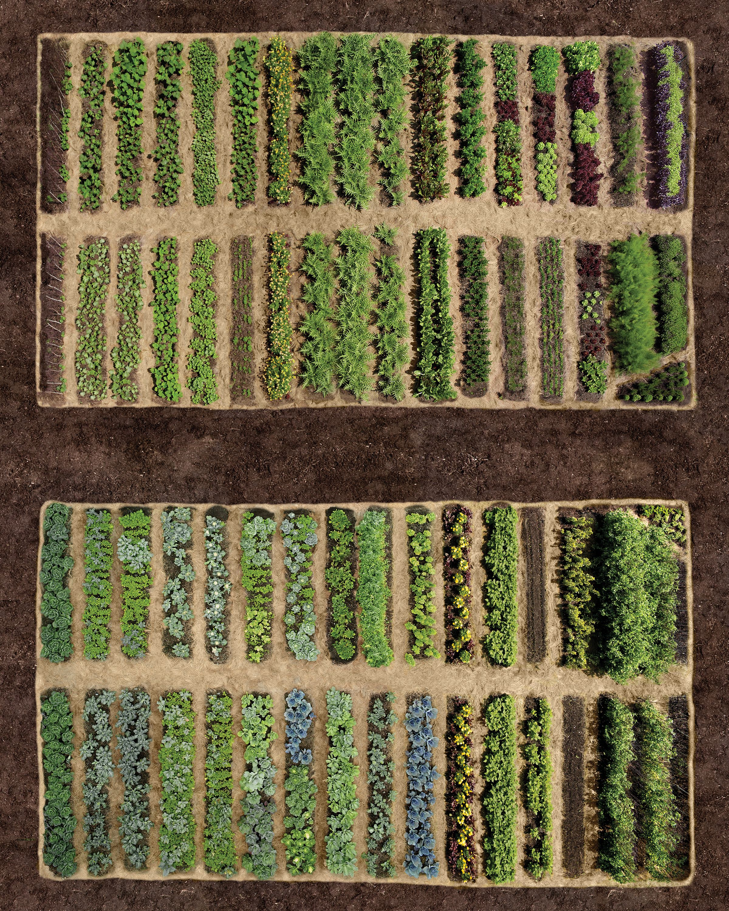 Planning Your Vegetable Garden is part of Vegetable garden planning, Garden layout vegetable, Vegetable garden design, Fall garden vegetables, Garden layout, Garden planning - Good planning is essential to a successful vegetable garden  Vegetables have specific requirements, and you must choose your site carefully to ensure a bountiful harvest  Here are the basics you need to consider before you select your seeds