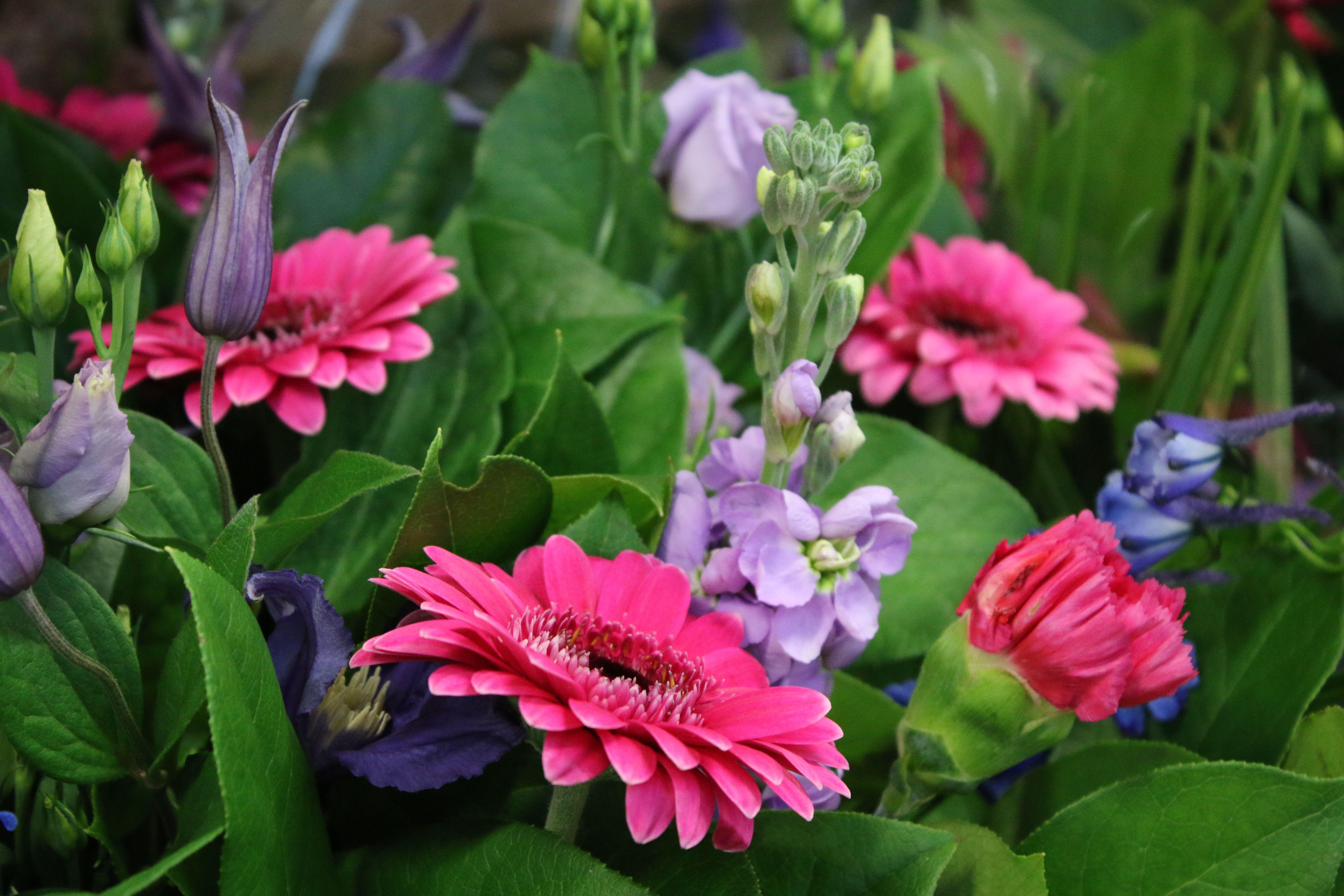 Snijbloemen Boeketten Fleurs Coupees Bouquets Floralux Tuincentrum Bloemen Centrejardinage Fleurs Tuincentrum Tuin Bloemen