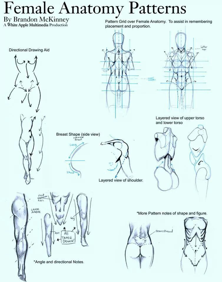 Anatomía femenina | Anatomia Bjd | Pinterest | Anatomía, Femenino y ...