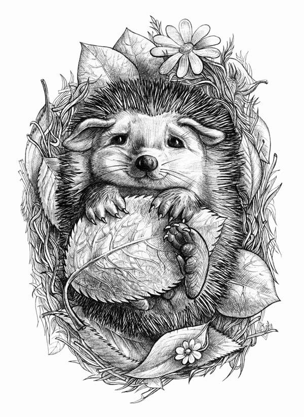 Little hedgehog and other little animals. Drawing, free