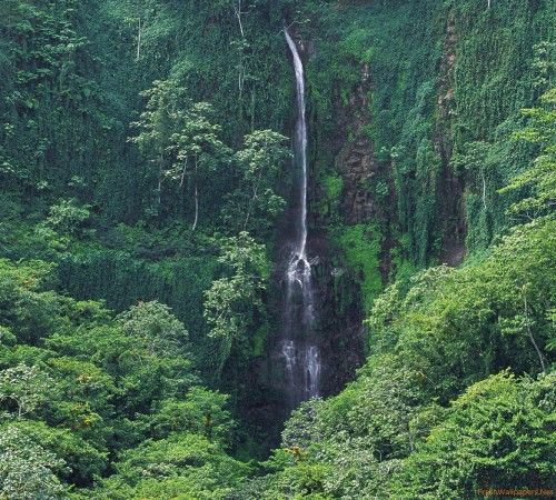 Lush Waters, Costa Rican Forest