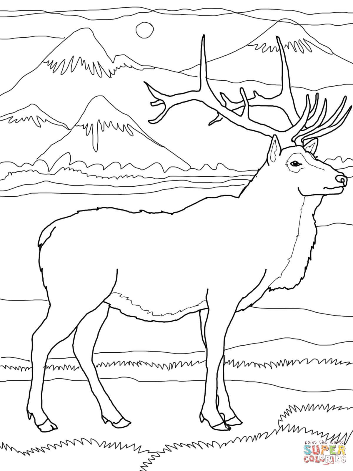 Elk Or Wapiti Coloring Page From Elk Category Select From 28106