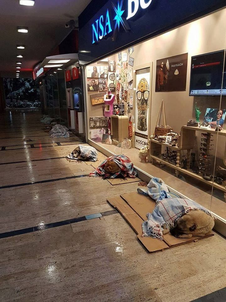 This Mall in Turkey Let Homeless Dogs Sleep Inside to
