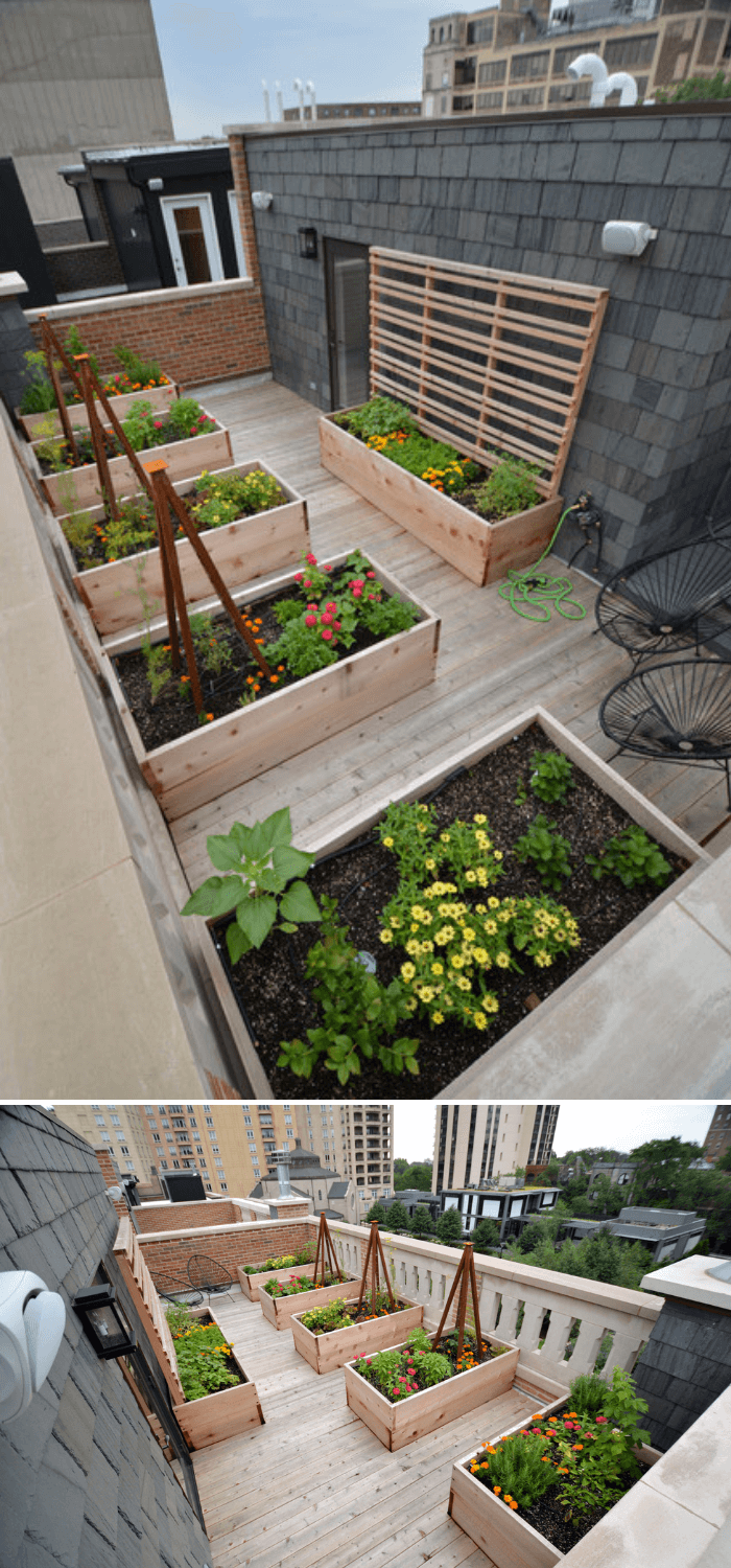 A Mid Sized Modern Full Sun Rooftop Landscaping With Deck